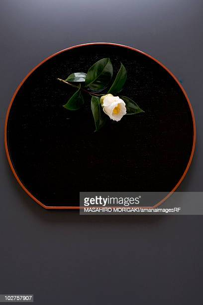 White camellia on lacquered tray