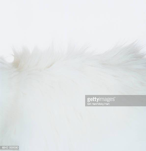 White Cat Fur
