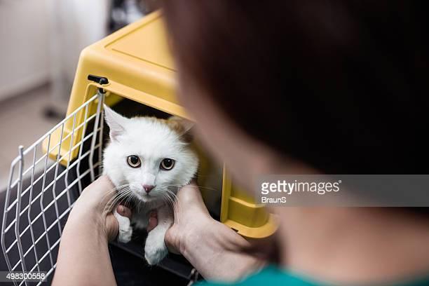 Weiße Katze in einem Käfig in Tierarzt's Büro.