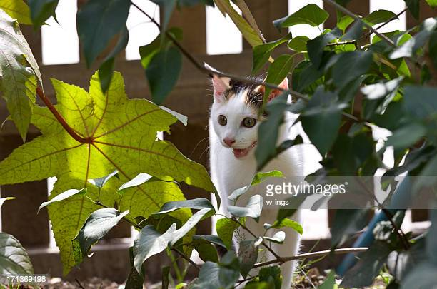white cat in flower bed