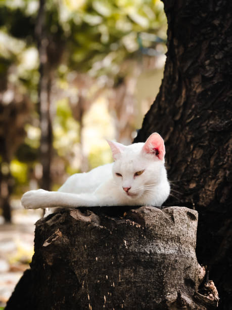 White Cat On Tree Trunk