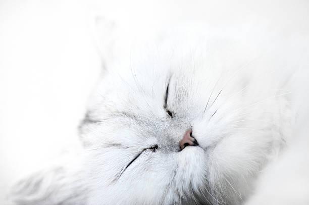 White Cat Wall Art