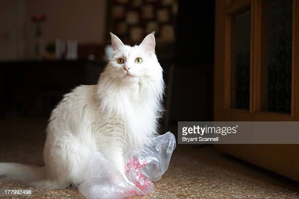 White Cat Playing With Bag