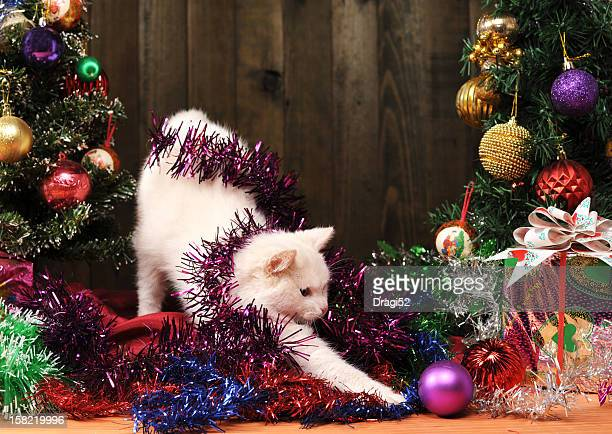White cat playing with decorations for Christmas trees