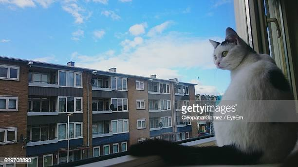 White Cat Relaxing On Window Sill