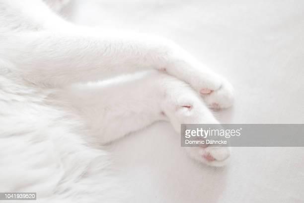 white cat sleeping - dähncke fotografías e imágenes de stock