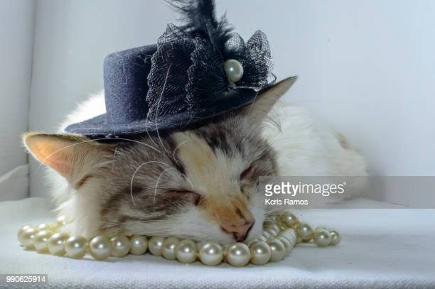 white cat sleeping with pearls necklace and black chaplet, white cat with queen crown in undefined background, ear and muzzle (very old cats). Because they are blends, SRD cats can have different colors and skin types, sizes, shapes and appearance. July 2