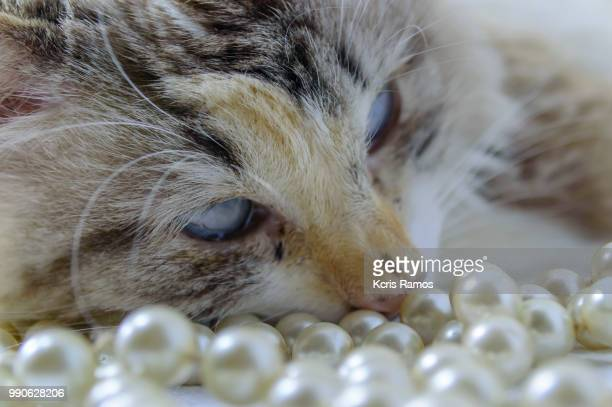 white cat sleeping with pearls necklace, white cat with queen crown in undefined background, ear and muzzle (very old cats). Because they are blends, SRD cats can have different colors and skin types, sizes, shapes and appearance. July 2, 2018 in Brazil.