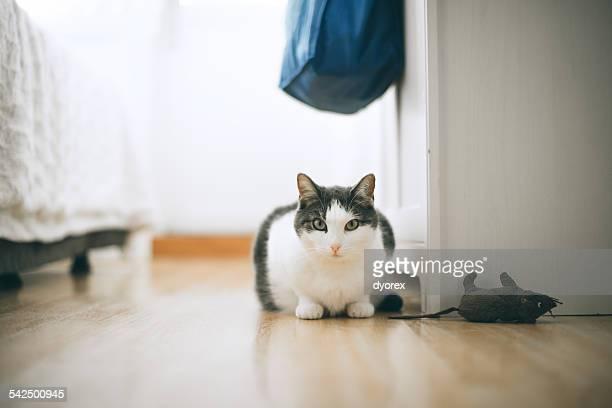White cat staring at camera