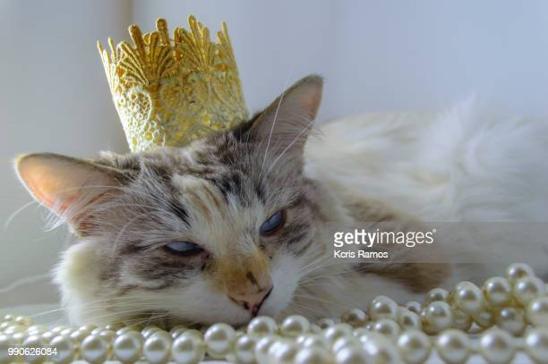 white cat with paw, white cat with queen crown in undefined background, ear and muzzle (very old cats). Because they are blends, SRD cats can have different colors and skin types, sizes, shapes and appearance. July 2, 2018 in Brazil. Because they are blen