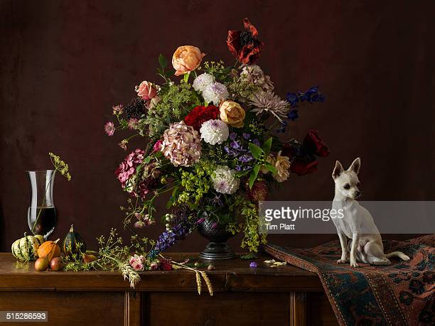 White Chihuahua with vase of cut flowers.