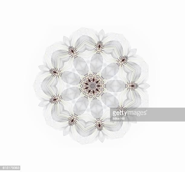 White Clematis Mandala