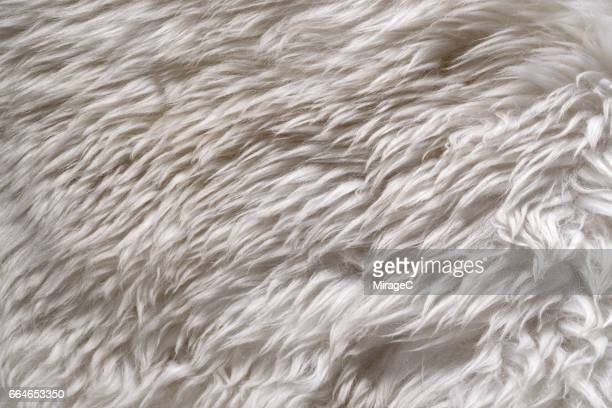 White Color Sheep Wool