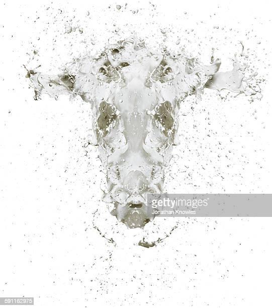 White cow shape splash