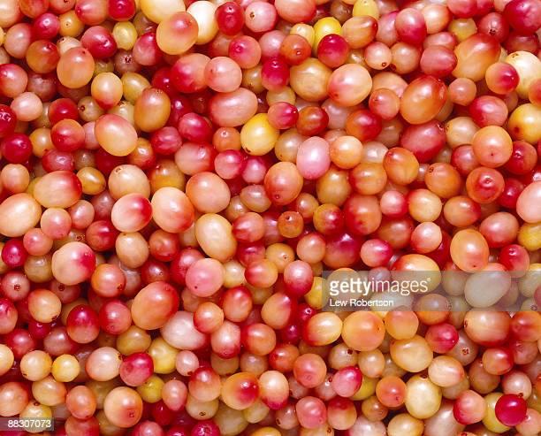 White cranberries
