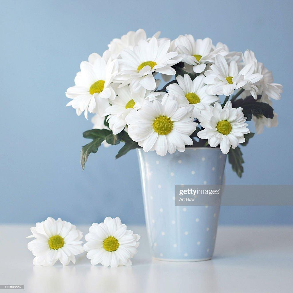 White daisies in blue polka dots vase stock photo getty images white daisies in blue polka dots vase stock photo reviewsmspy