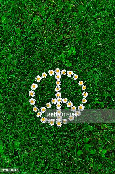 White daisies, laying on the grass forming a peace sign symbol