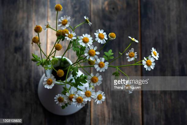white daisy pot in wooden table - デイジー ストックフォトと画像