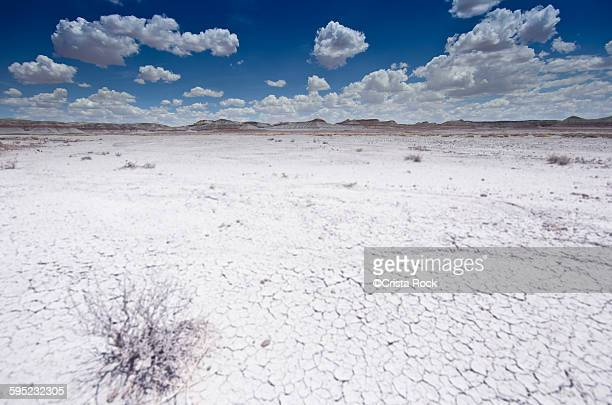 white desert - tumbleweed stock photos and pictures