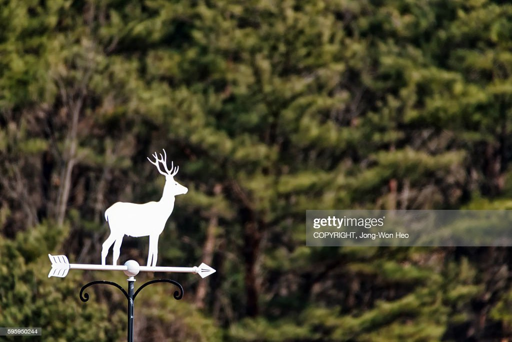 A white directional sign with the figure of a deer : Stock Photo