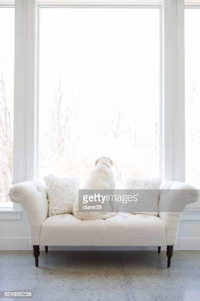 white chien sur un canapé blanc