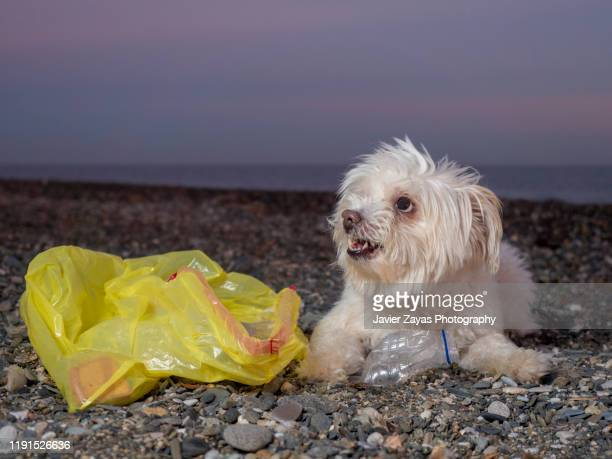 white dog recycling plastic - sustainable development goals stock pictures, royalty-free photos & images