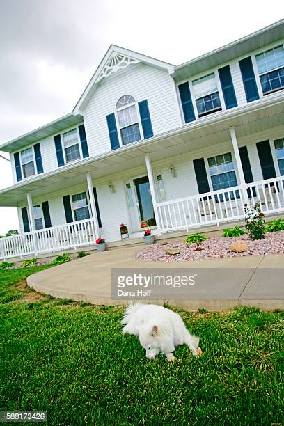 white dog resting in front of multi-story plantation home - dana white stock pictures, royalty-free photos & images