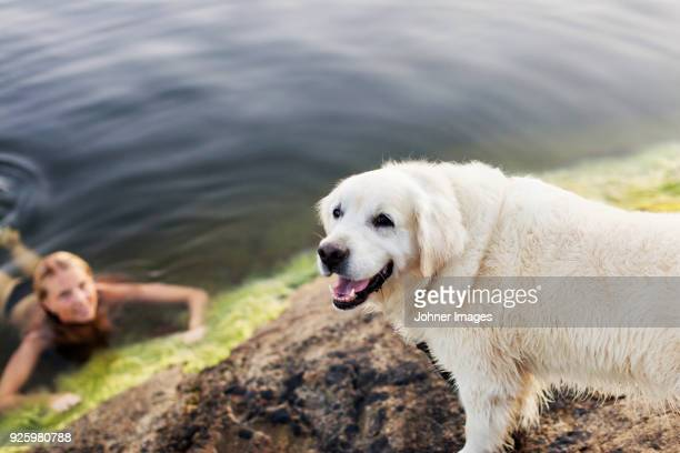 White dog standing by young swimming woman