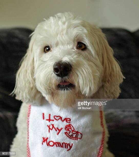 White Dog Wearing a Bib Saying I Love My Mommy