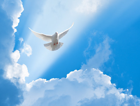White dove flying in the sun rays among the clouds 1048376024