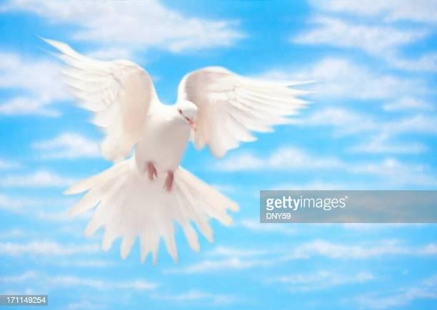 White Dove of Peace