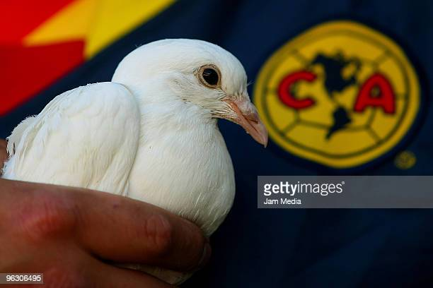 A white dove of peace symbolizing support for Paraguayan striker Salvador Cabanas is seen during a Mexican championship Bicentenario 2010 match...