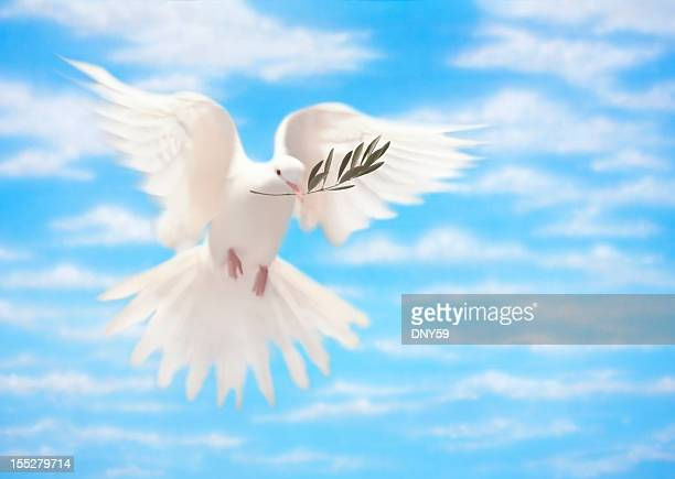 white dove of peace with olive branch - olive branch stock pictures, royalty-free photos & images