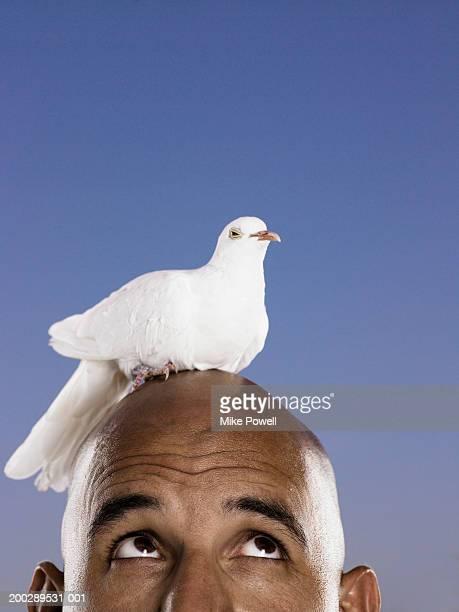 White dove on man's head