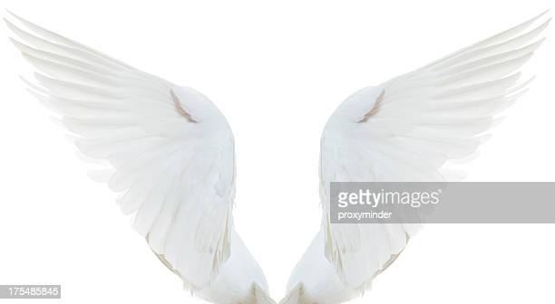 White Dove Spread Wings