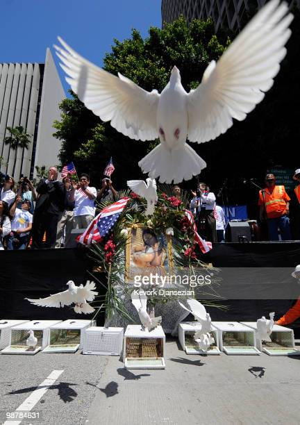 White doves are released after thousands of demonstrators marched in a May Day immigration rally on May 1 2010 in Los Angeles California More than...