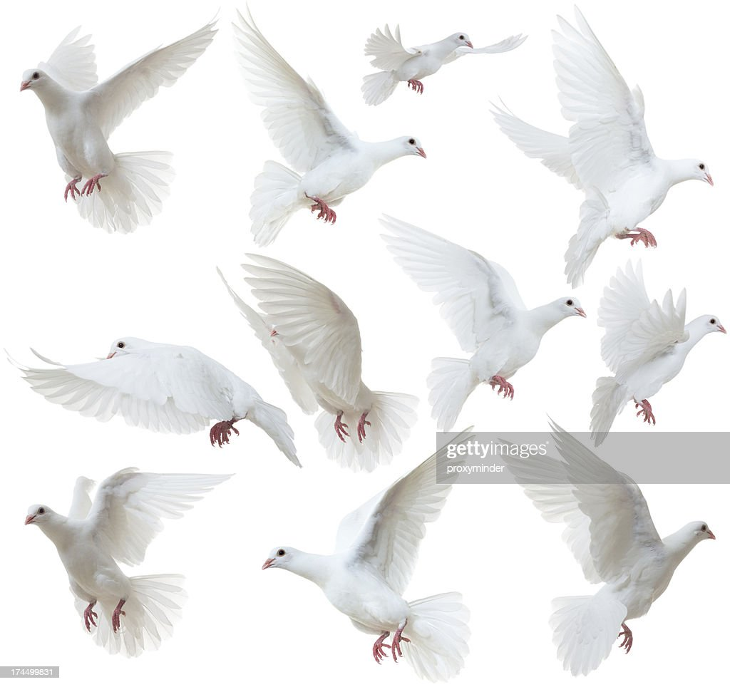 Dove bird stock photos and pictures getty images white doves flying away voltagebd Gallery