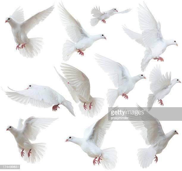 Pombas branco voar longe