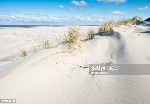 White dunes with beach grass, beach and North Sea, Langeoog, East Frisia, Lower Saxony, Germany