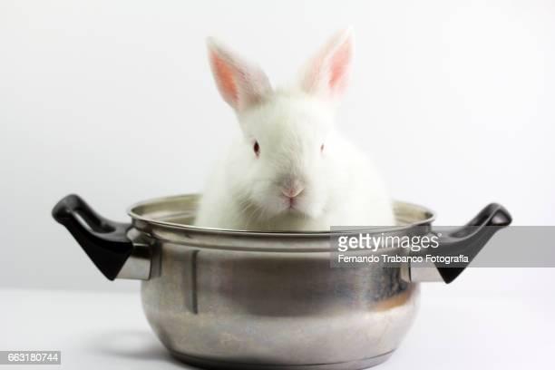 White dwarf rabbit inside a cooking pot