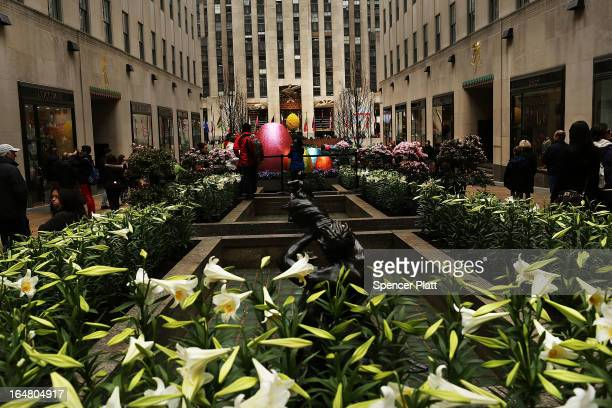 White Easter lilies are planted in Rockefeller Center in celebration of the upcoming Easter holiday on March 28 2013 in New York City Workers planted...