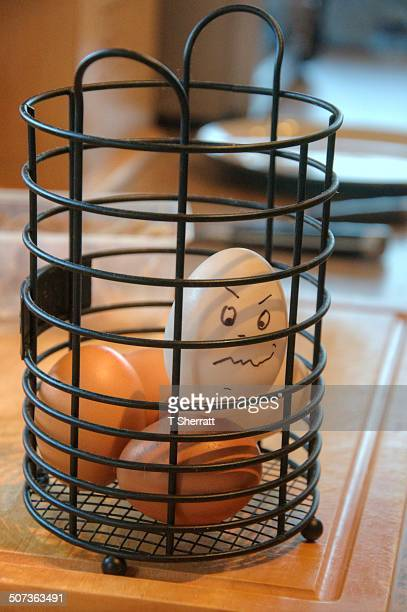 White egg caged with brown eggs
