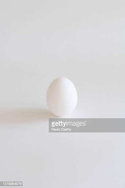 white egg standing on white background - 動物の卵 ストックフォトと画像
