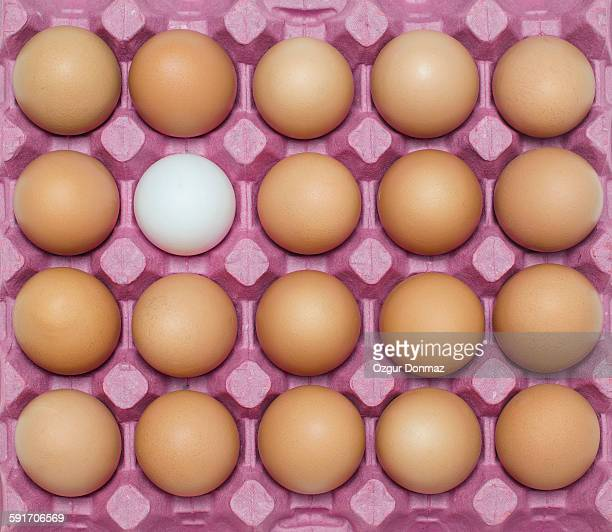 White egg with large group of brown eggs, full fra