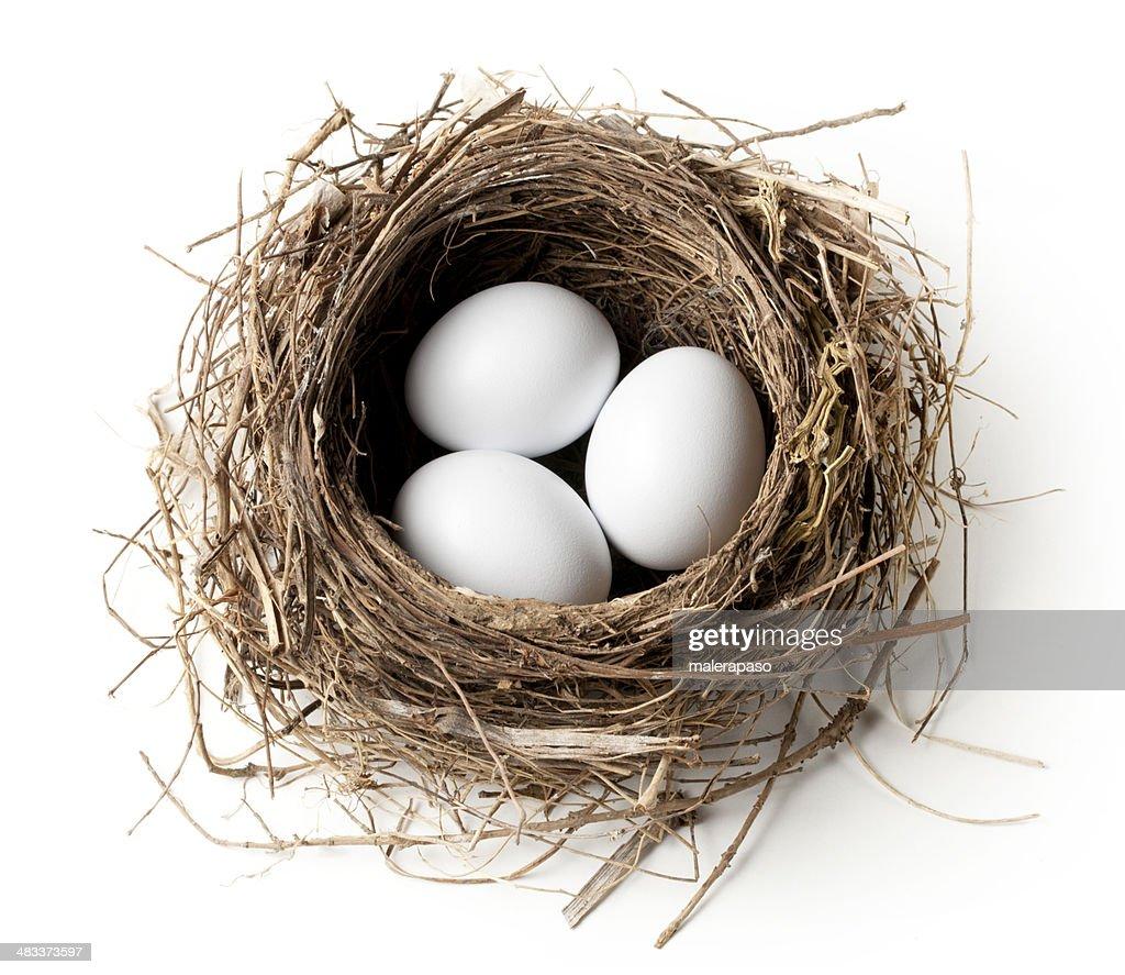 White eggs in the nest : Stock Photo