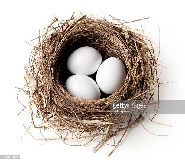 White eggs in the nest