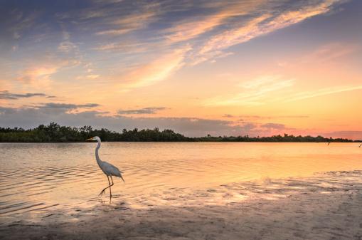 White Egret in Sunset 509865405
