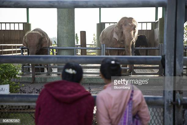 White elephants stand in a facility near the Uppatasanti Pagoda in Naypyidaw Myanmar on Wednesday Feb 3 2016 Myanmar's new popularly elected upper...