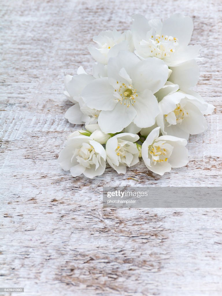 White english dogwood flowers bouquet stock photo getty images white english dogwood flowers bouquet stock photo izmirmasajfo