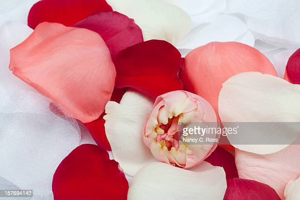 White Fabric Flowers And Fresh Rose Petals, Wedding Background